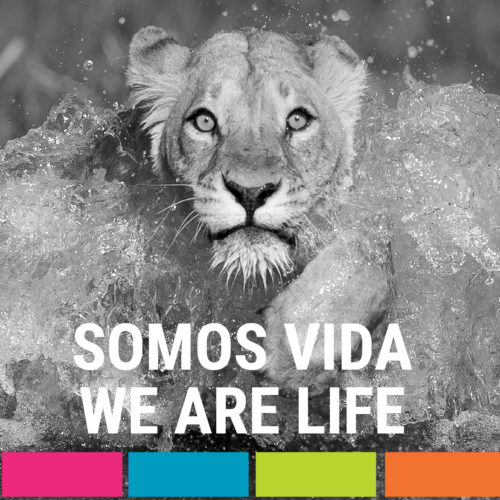 Somos Vida | We are Life